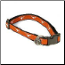 Texas Longhorns Dog Collar- Premium
